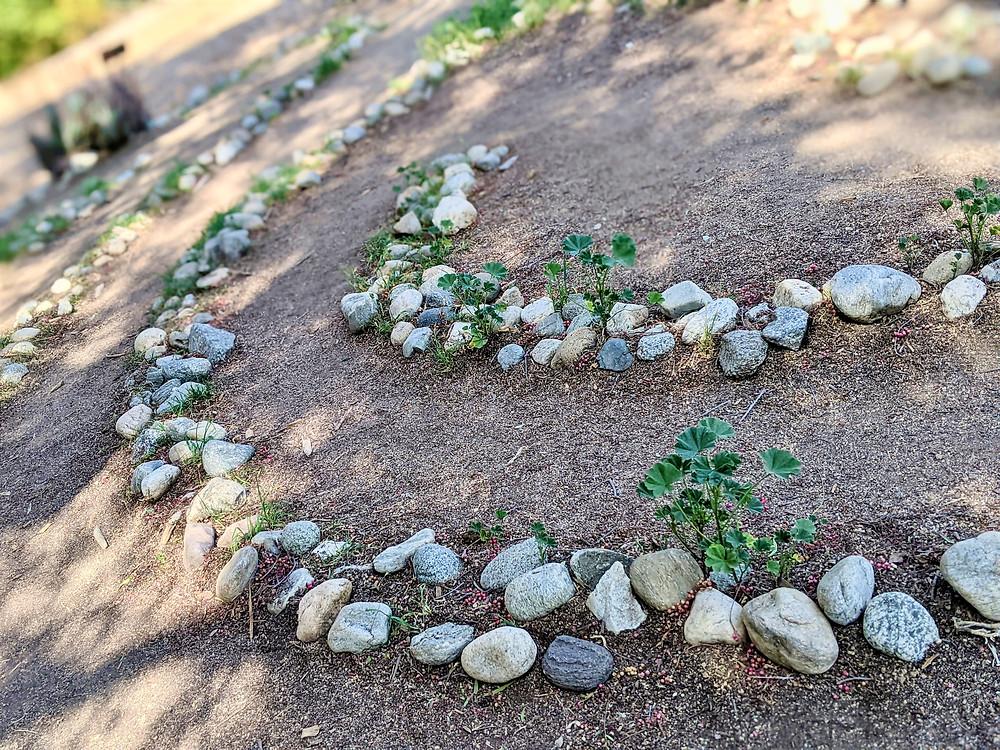Stone path of Labyrinth at Arlington Garden