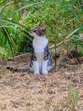 striped cat posing 3.jpeg.jpeg
