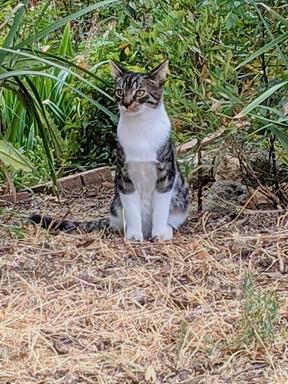striped cat posing 2.jpeg.jpeg