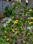 yellow flowers.jpeg