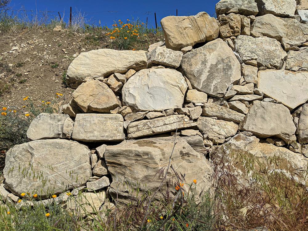 Porous calcareous limestone soils allow for dry farming in Paso Robles wine region