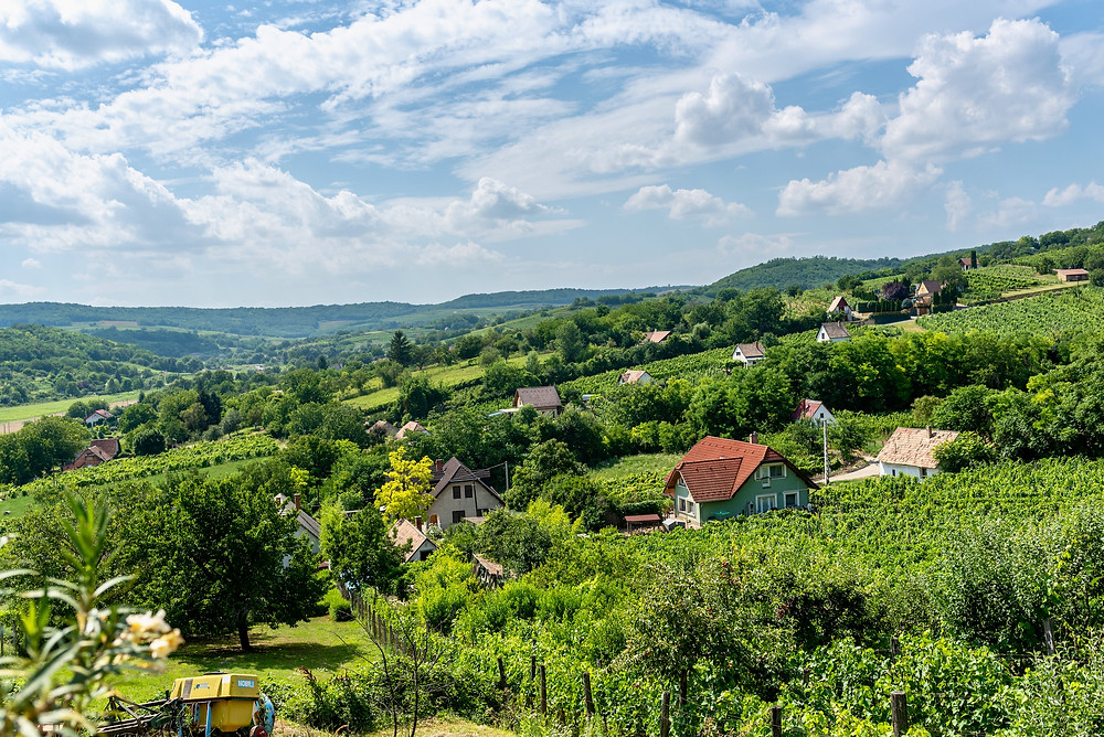 The Szekszard Vineyard in southern Hungary