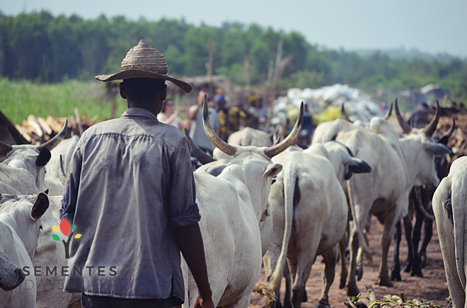 ONG_Sementes_da_Saude_316_Missão_Benin_2