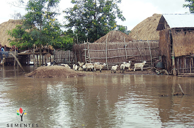 ONG_Sementes_da_Saude_255_Missão_Benin_2