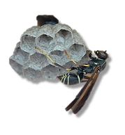 wasp nest alpha & shadow.png