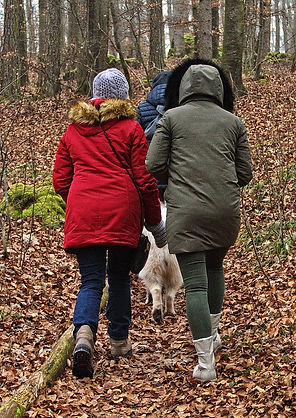 group walking in woods--pixabay.jpg
