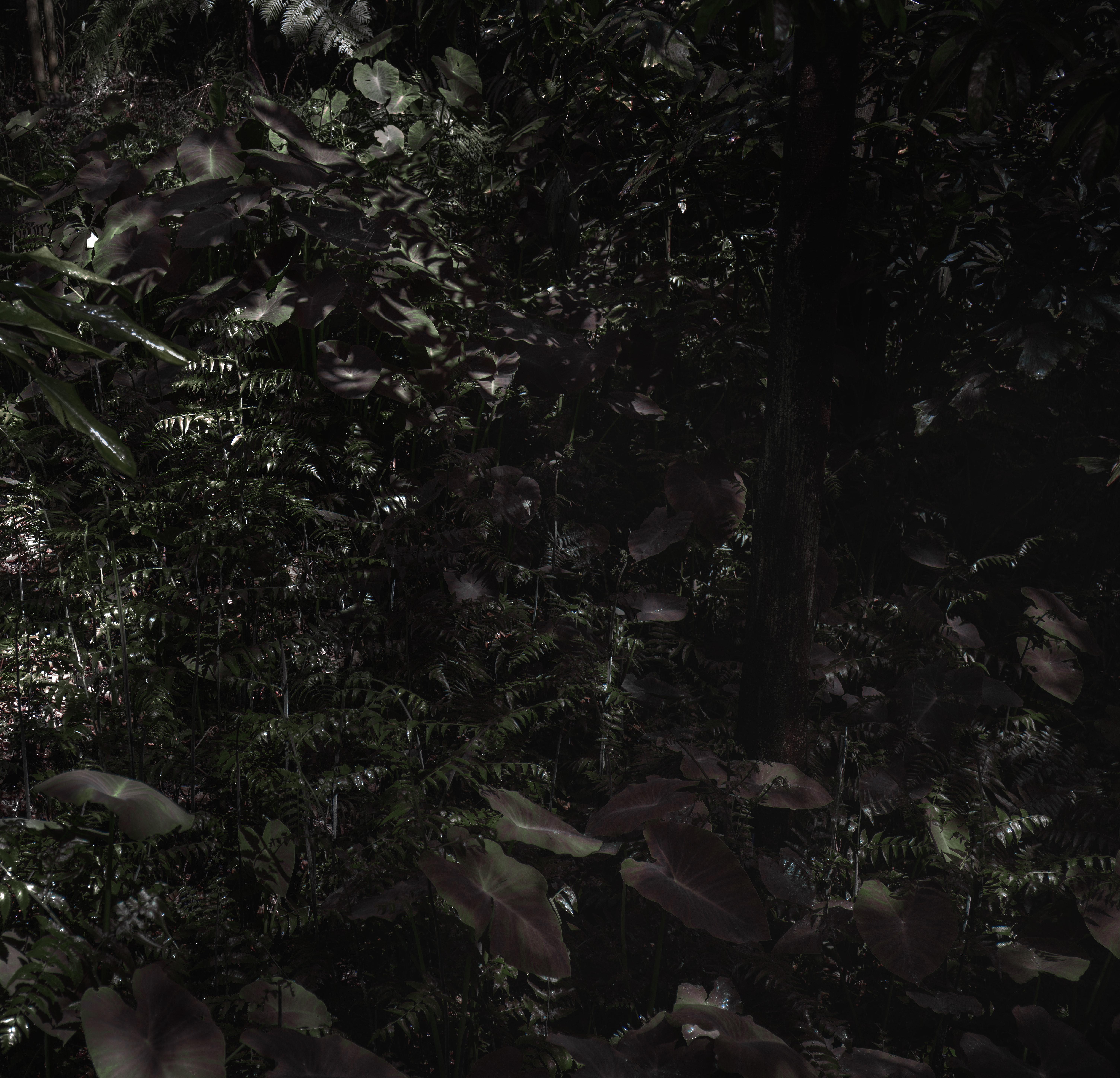 prickly ferns