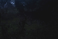 'Orchard at Dusk'