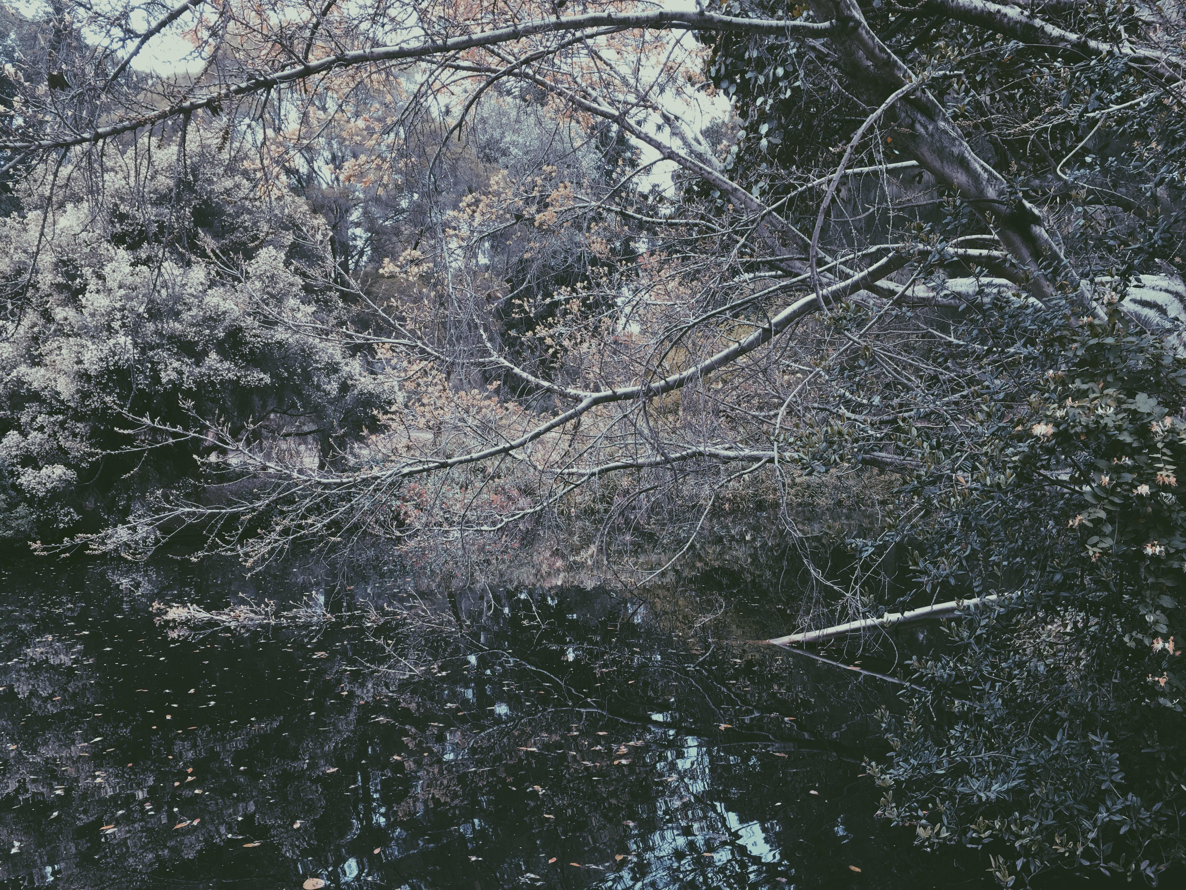 lake forlorn