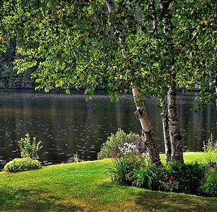 lakeside lawn.jpg