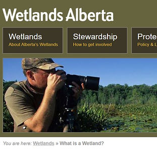 NWAMP Wetlands Alta cover.JPG