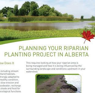 Planting Riparian Alta Cows Fish cover.J