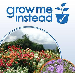 Grow-Me-Instead-1.jpg