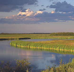 Wetland_mauve_green.jpg