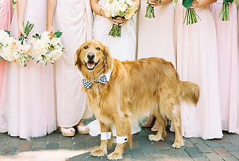 dogs-in-weddings-bowtie-and-cuffs.jpg
