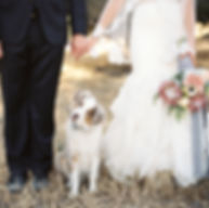 dogs-in-weddings-thumb.jpg