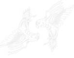 Logo Vermel - Foto y Video para Bod
