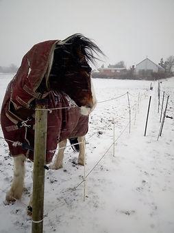 jig in snow -20210126-WA0002.jpg