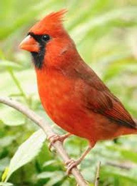 Enhancing Bird Habitat in your Yard with Dave Zumeta
