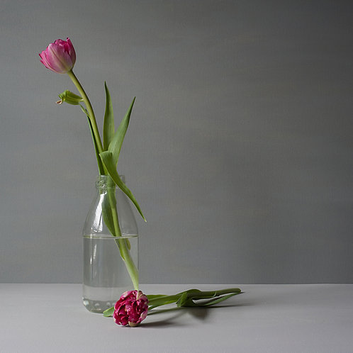 Pink Tulips, 30 x 30cm Fine Art print