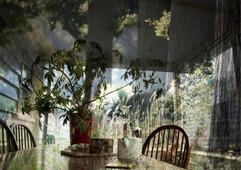Transient Memory 14 (Summer Woods).jpg