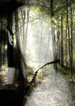 Transient Memory 3 (Ben's Woods) A3.jpg