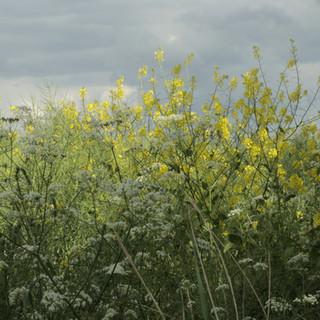 Hedgerow (spring + summer)