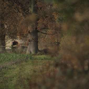 Hedgerow (autumn + winter)