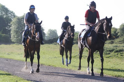 2016 yard and gallops 038.jpg