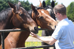2016 yard and gallops 228 (1).jpg