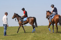 2016 yard and gallops 198.jpg