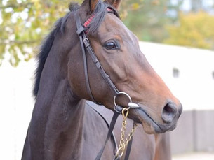 It's Dreams Delivered for the Do Well Syndicate
