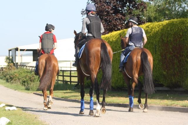 2016 yard and gallops 131.jpg