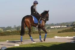 2016 yard and gallops 043.jpg