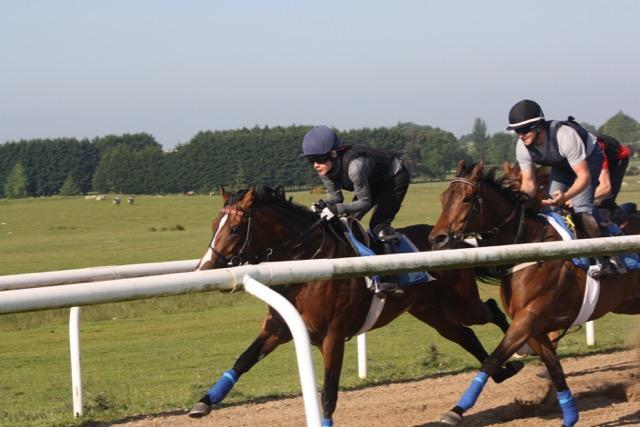 2016 yard and gallops 114.jpg