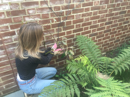 The benefits of gardening II