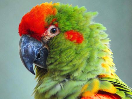 Dicas de manejo - Pássaro sente frio?