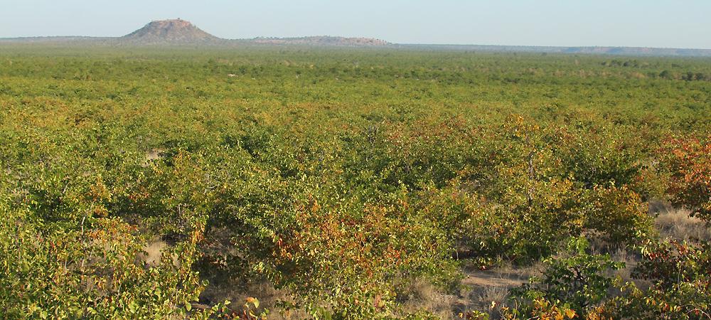 Kundani Hill