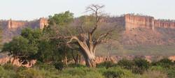 Chilojo baobab