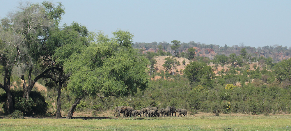Machaniwa elephants