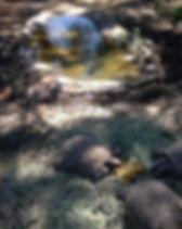 tortoises out of hibernation.jpg