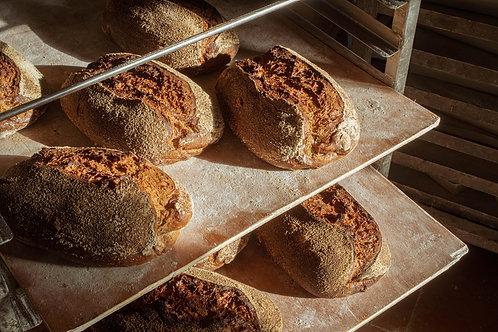 לחם שחר משמר השרון 2020