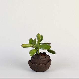 ROSAE vase