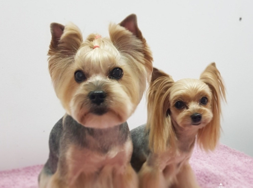 Haircut & Style (Small Breeds max.10kg)