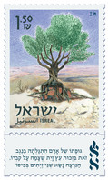 """Label inscription: """"A man's body was discovered in the Negev, thanks to an olive tree that grew on the grave, the murdered man carried two olives in his pocket"""""""