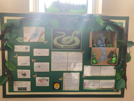 Amazon Conservation in Yr5