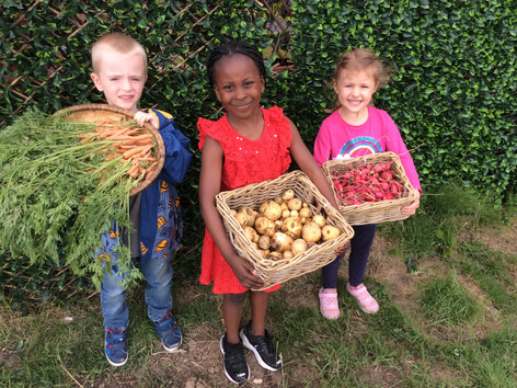 Early Harvest in Reception!!