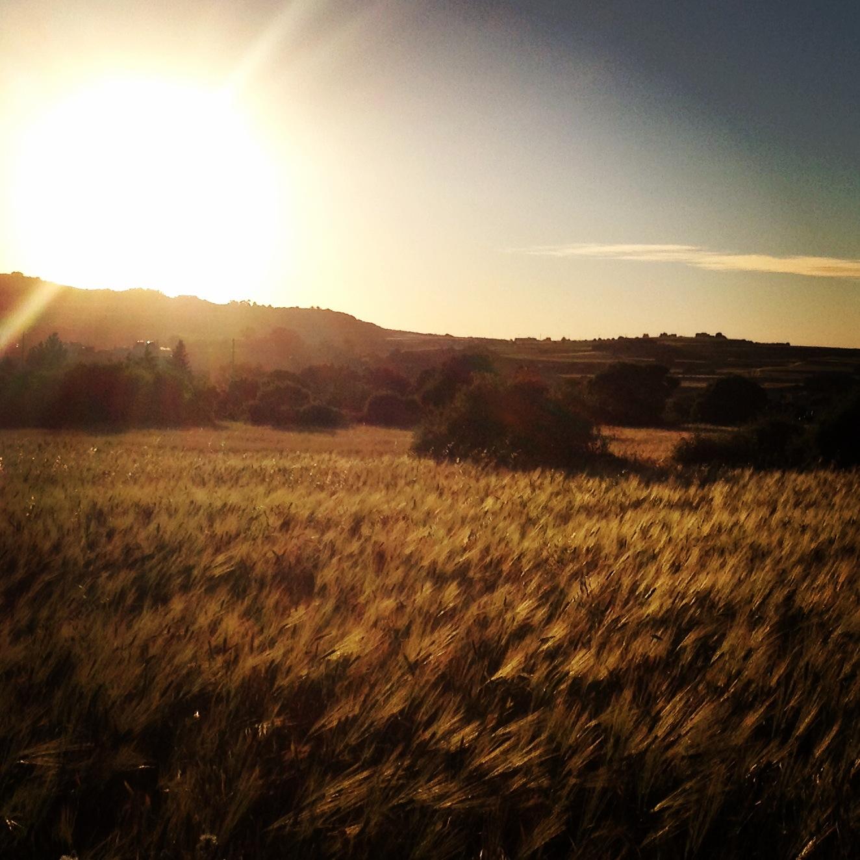 Evening Stroll