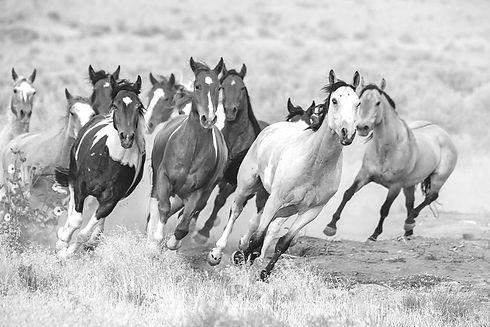 wild-horses-running-utah_edited.jpg