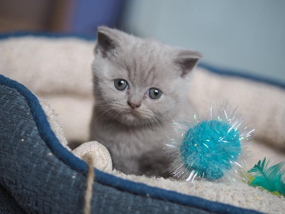Kitten 2020 TM 7w.jpg